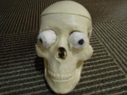 カウンセリングルームの骸骨